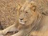 Mr_lion